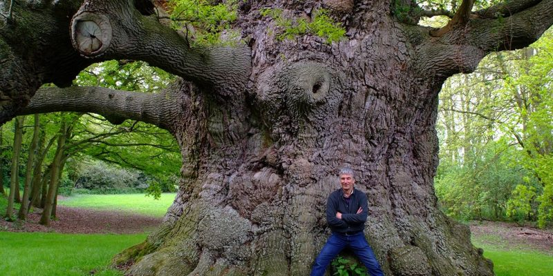 Kent Heritage Trees and 'The British Oak'